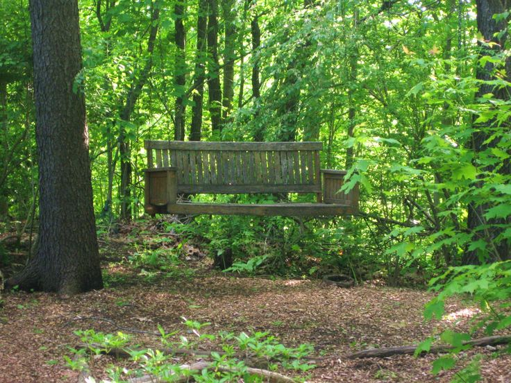 landscape wooded area