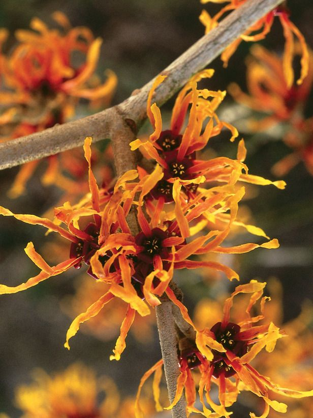 Winter Color - Growing Something Gorgeous: Plants That Pop in Design on HGTV