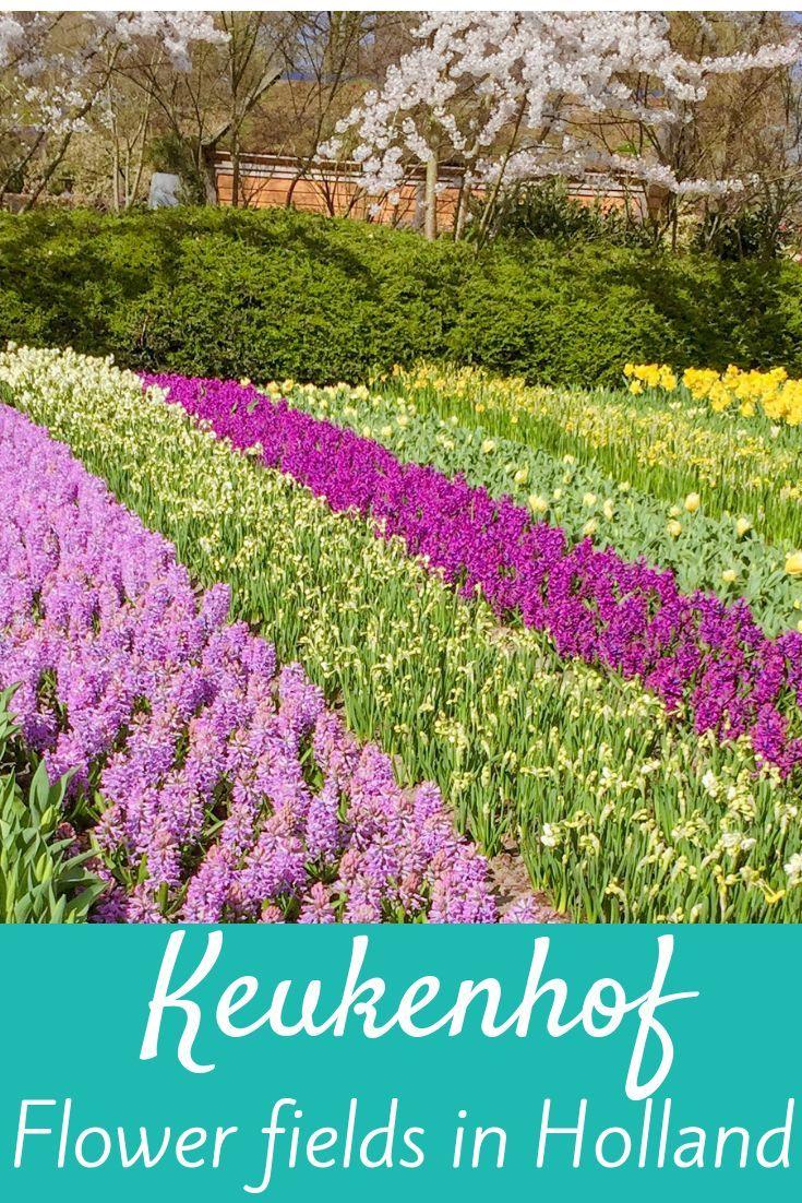 b1ffdbb68a81d421db2d3b0c842e8fc8 - How To Get To Keukenhof Gardens