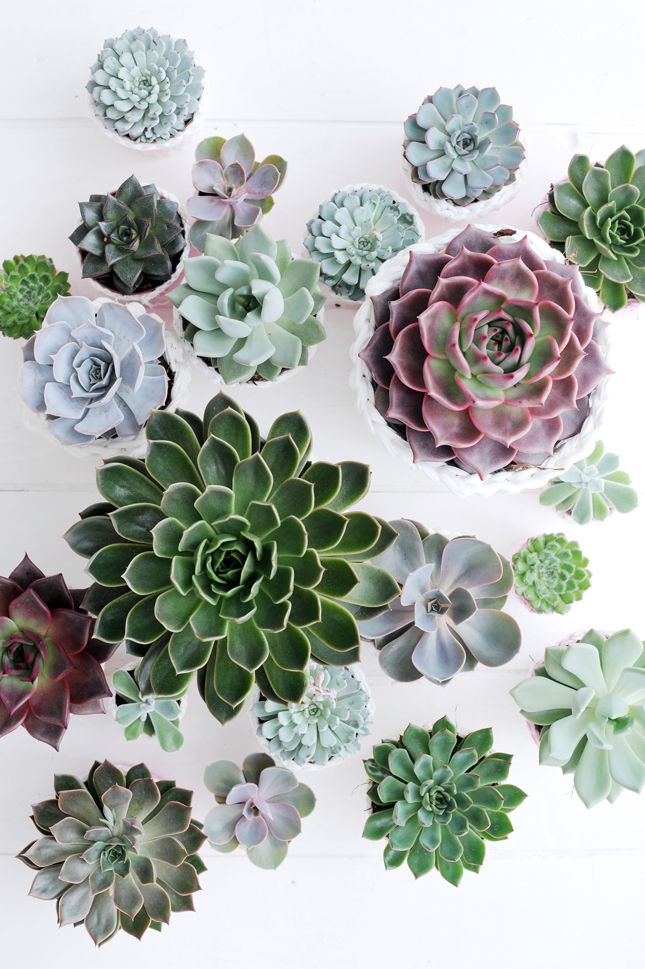 Happy Interior Blog: Plant Of The Month: Echeveria                                                                                                                                                     More