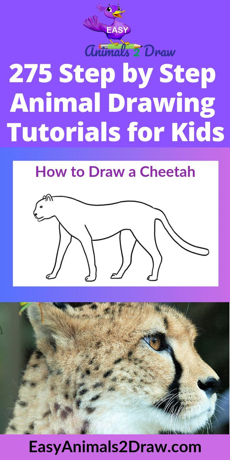 How To Draw A Cheetah Step By Step Easy Animals 2 Draw In 2020 Cheetah Drawing Drawing Tutorials For Kids Easy Animals
