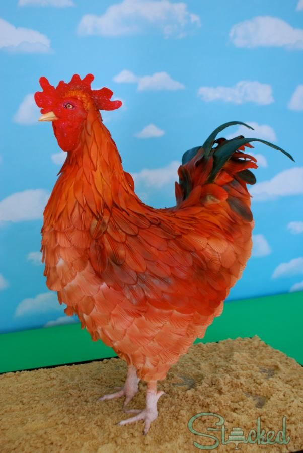 Macho the Rooster - Cake by Stacked | CakesDecor.com