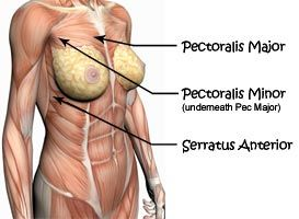 Image result for chest muscle women