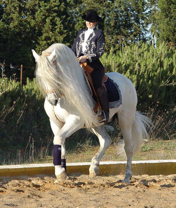 Majestic Andalusians Zucht- und Dressurpferde aus Spanien 9