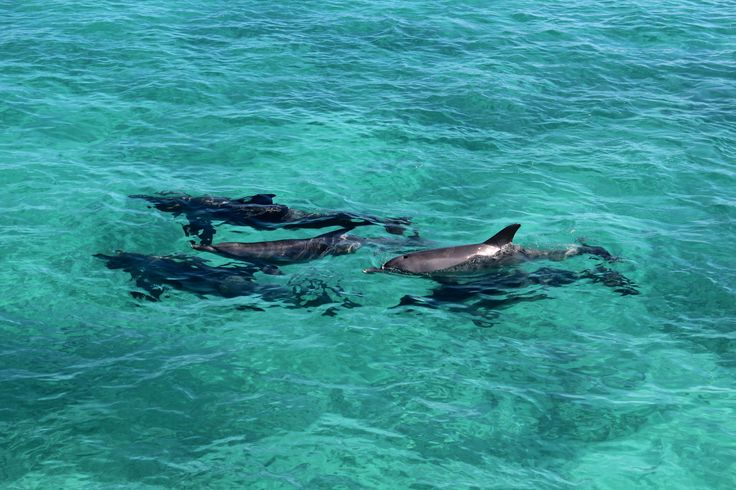 Dolphin pods following boat