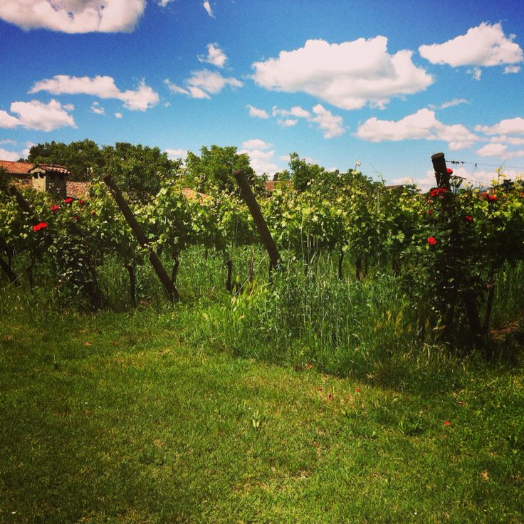 Our Organic vineyards