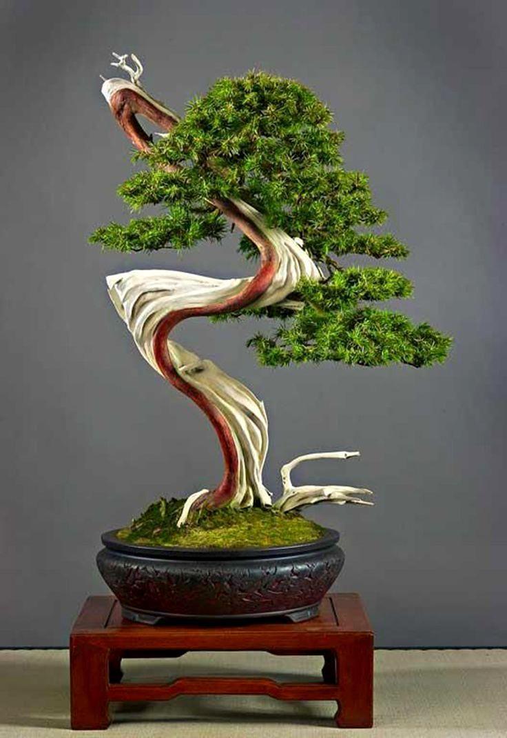 ☼♦What do you think about this pretty #bonsai tree?☼☺       #BonsaiInspiration