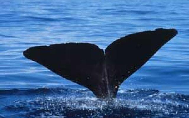 La bellezza delle balene all'interno degli oceani #balene #oceano #belelzza
