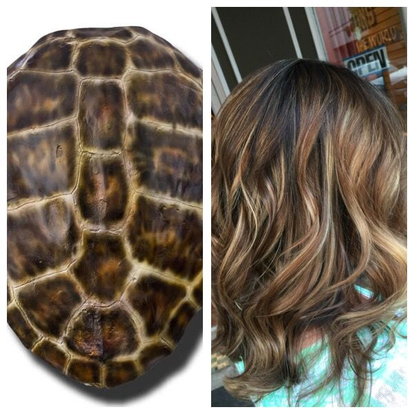 Tortoise shell highlights balayage color from nature