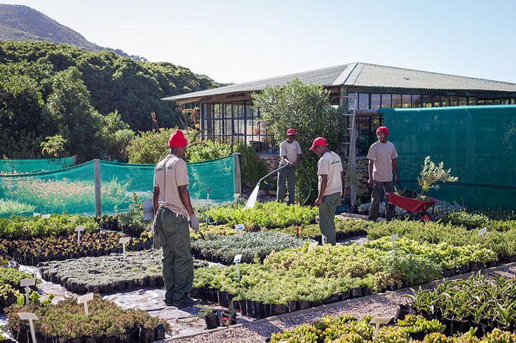 10 Things You Didn't Know About The Grootbos Reserve - We have our very own #fynbos nursery #gardening #sustainabletourism http://www.grootbos.com/en/blog/travel/10-things-you-did-not-know-about-the-grootbos-reserve