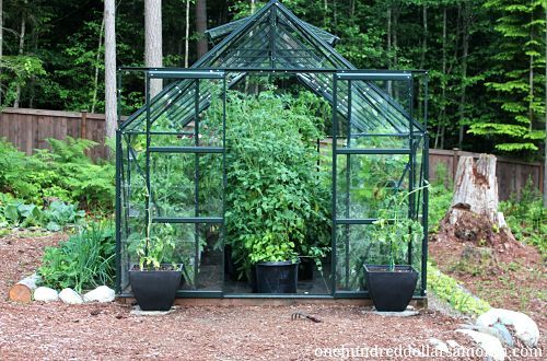 How to Grow Food in a Greenhouse - Tomatoes, Peppers, Strawberries, Basil + More | One Hundred Dollars a Month