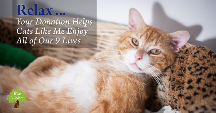 Tree House is a publicly funded non-profit, and thanks to our generous donors, we have been able to do amazing things for animals and people in our community. Please consider a donation today and help us save more lives.