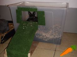 die besten 25 kaninchen spielzeug ideen auf pinterest hasen kaninchenpflege und haustier h schen. Black Bedroom Furniture Sets. Home Design Ideas