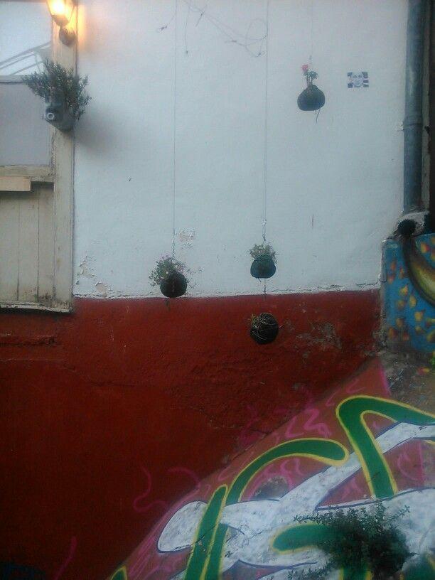 Plantitas