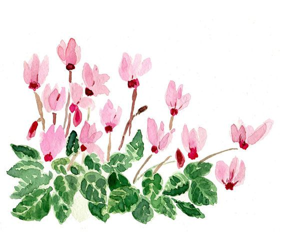 Cyclamen plant, art Print of  watercolor painting , Still Life.  mother's day, Blue Pink green ,cottage chic, limited editon