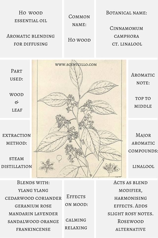 Essential oil spotlight: Ho wood essential oil. (Cinnamomum camphora ct. linalool). A high percentage of the aromatic compound linalool (also found in lavender and rosewood essential oils) gives ho wood oil a warm, sweet, woody, slightly floral aroma. http://www.scentcillo.com/blog/subtly-floral-ho-wood-cinnamomum-camphora-ctlinalool-essential-oil