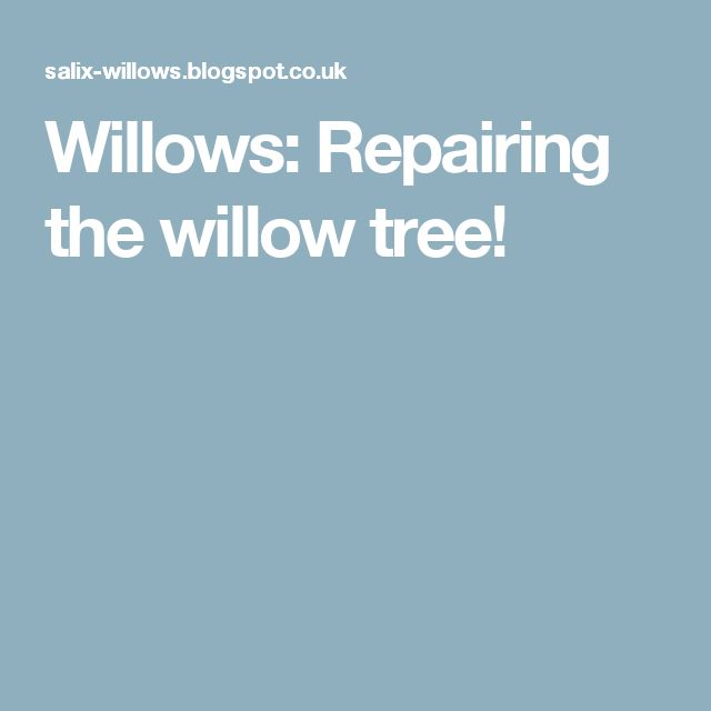 Willows: Repairing the willow tree!