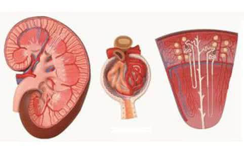 How to protect the kidneys?