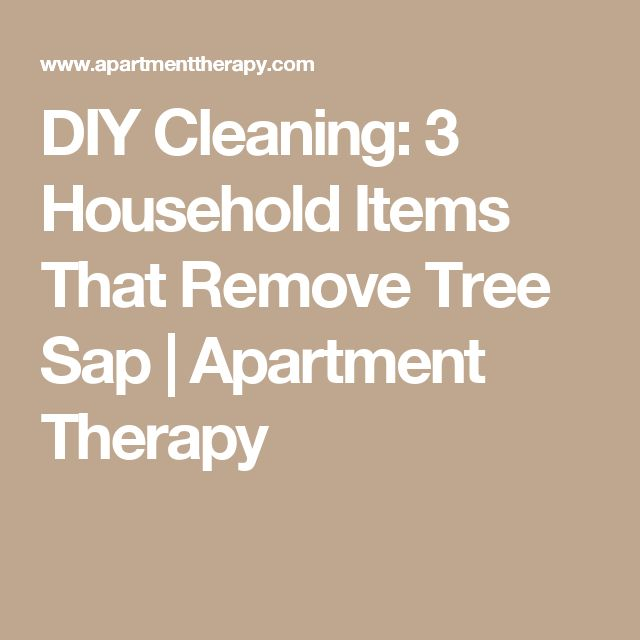 DIY Cleaning: 3 Household Items That Remove Tree Sap | Apartment Therapy