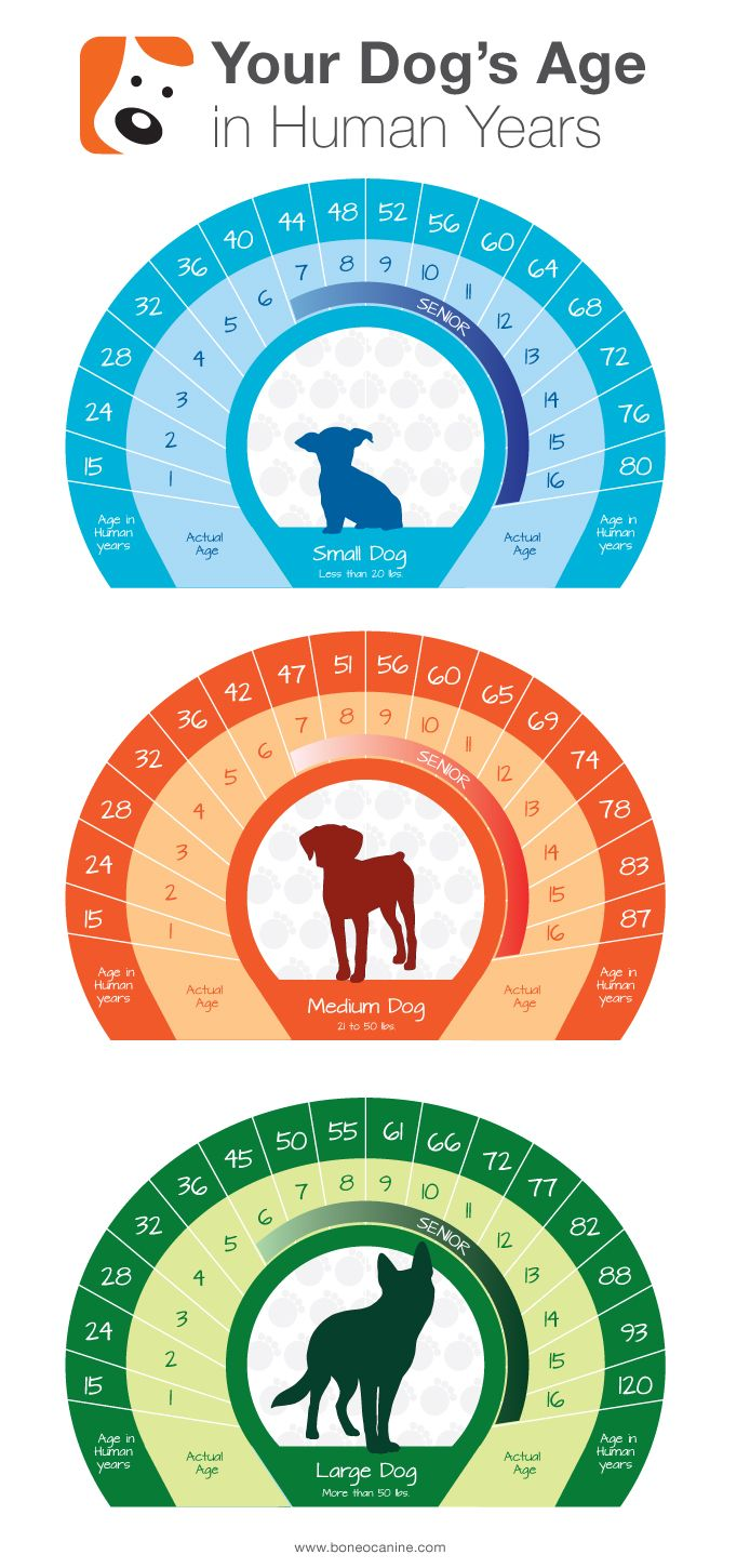 Dog Age Chart - Tap the pin for the most adorable pawtastic fur baby apparel! You'll love the dog clothes and cat clothes! <3