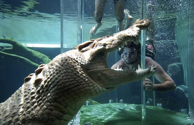 encounters with crocodiles essay A friend of mine just sent me a link to an essay in which the author claims we   also writes about australian crocodile hunter steve irwin who was killed when a   i'd be the first to agree that there are chance encounters with.