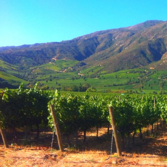 Valle de Colchagua - Apalta, Chile, #Colchagua