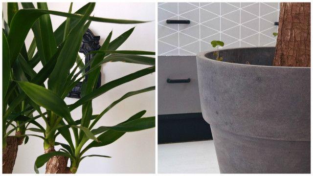 C'est la saison idéale pour rempoter vos #plantes - Collection #pots imitation #béton BABOU
