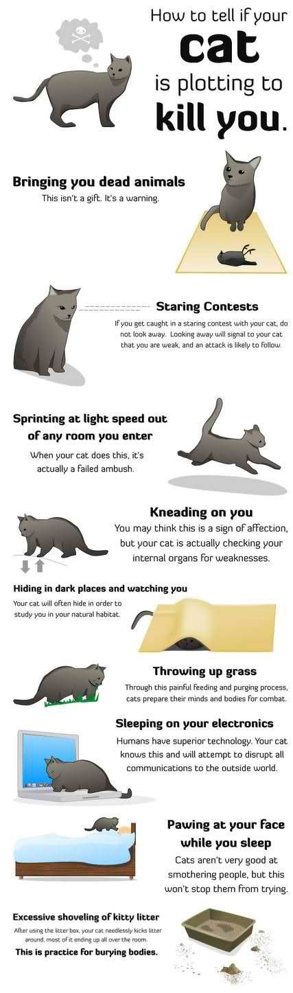 How to tell if your cat is plotting to kill you.