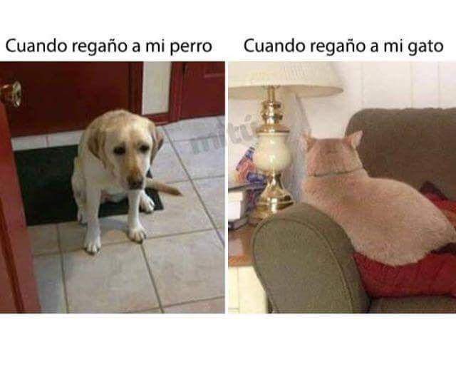 Perro vs gato