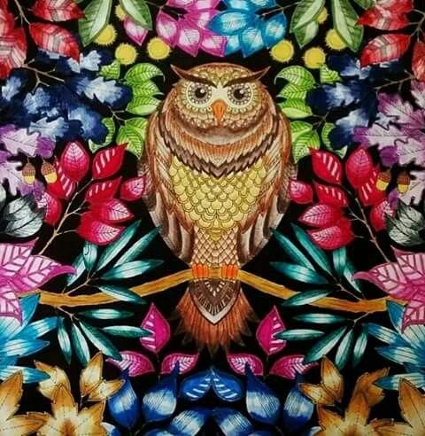 Livro De Colorir Coruja Jardim Secreto Pinterest