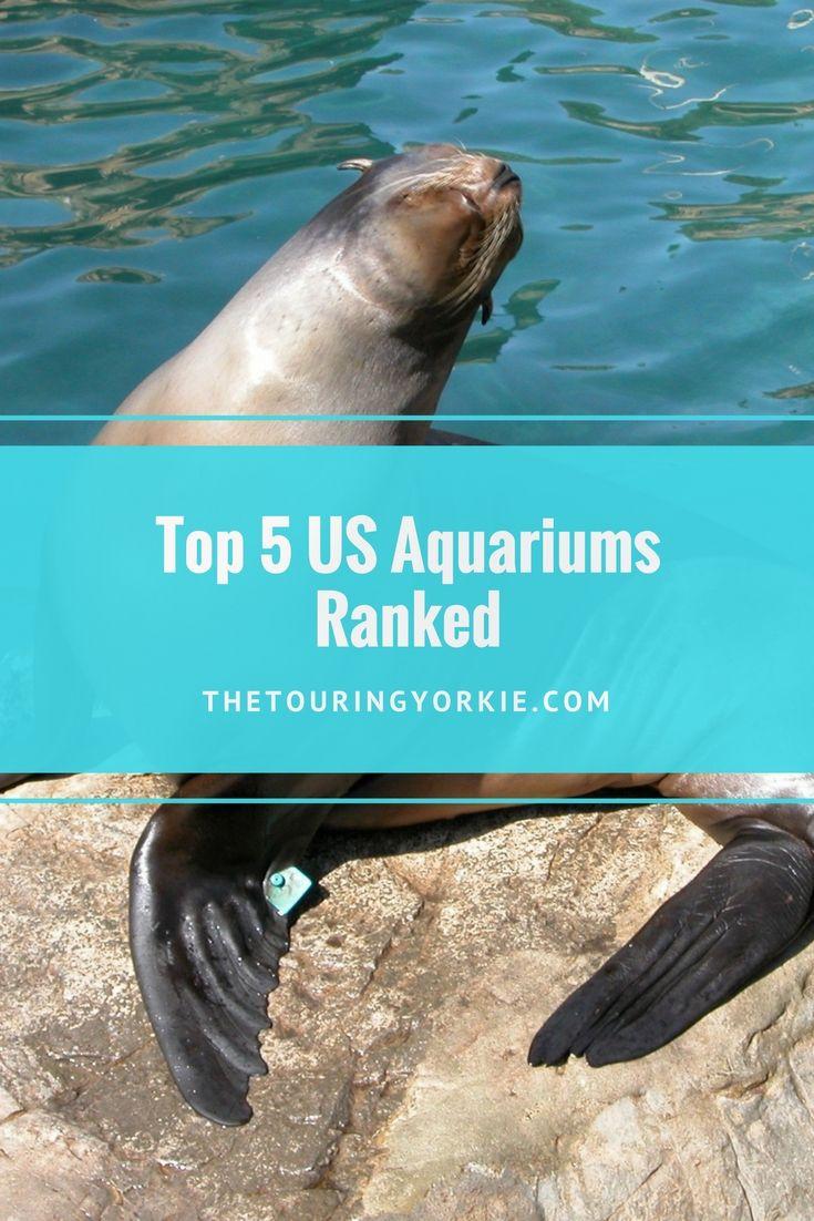 Ranking of the top US Aquariums including the Shedd Aquarium, National Aquarium in Baltimore, Georgia Aquarium, New England Aquarium in Boston, and Monterey Bay  Aquarium in California. Don't miss my tips for best photography.