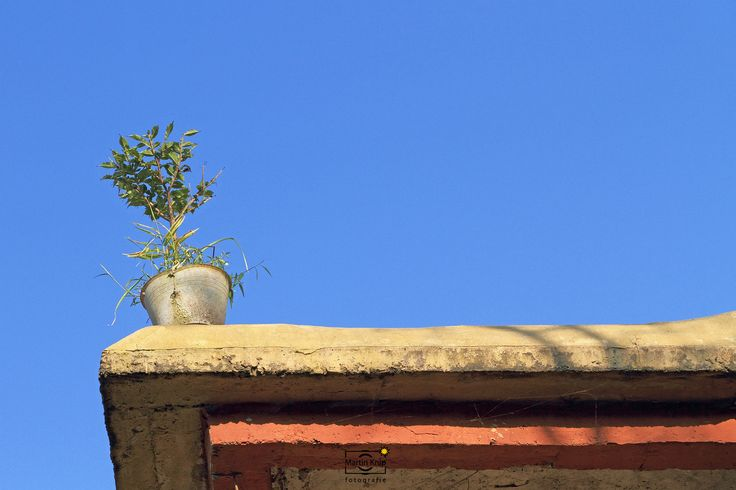 © 2010 Martin Knip Fotografie | Lonely plant | China