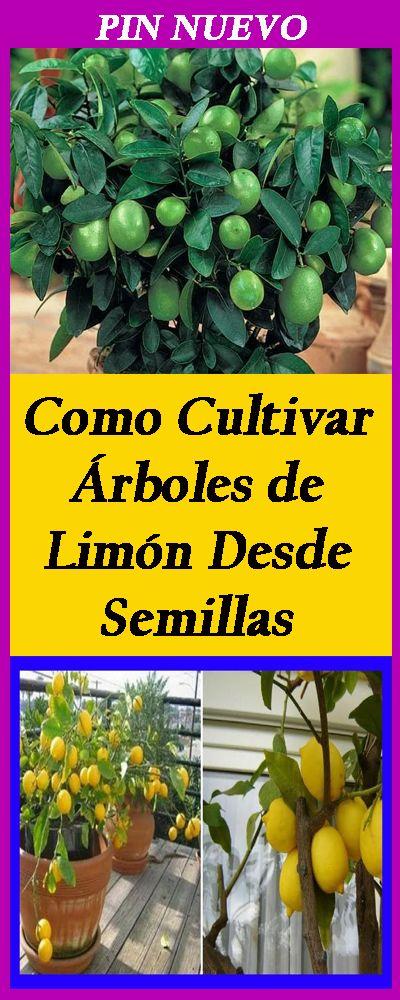 Como Cultivar Árboles de Limón Desde Semillas