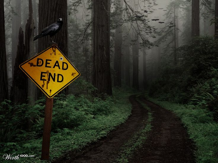 Dead End Dirt Roads Often Lead To Beautiful Places The