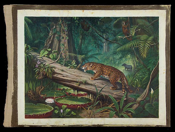 In het Braziliaans oerwoud-Schoolplaat Koekkoek.