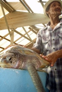 The Hegg Turtle Sanctuary - Bequia Island, The Grenadines
