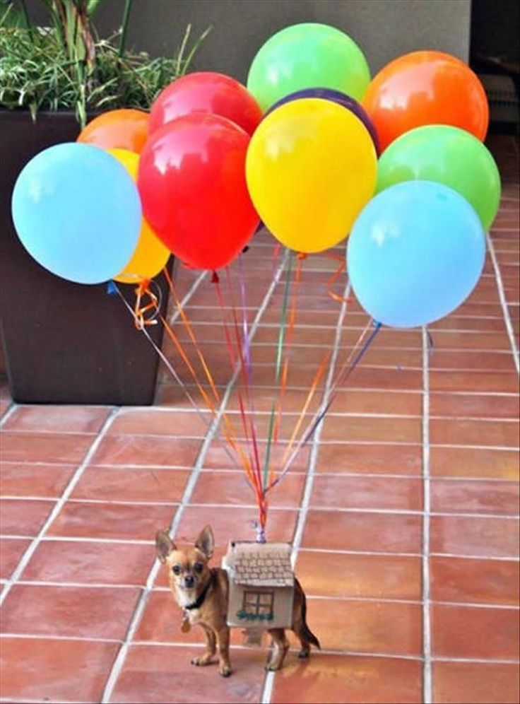 The Best Halloween Costume Ideas For Your Dogs 23 Pics Pet