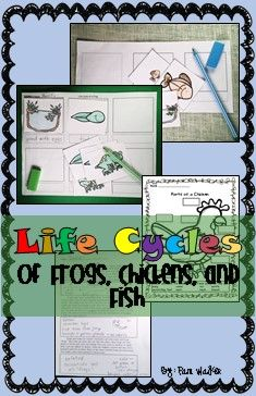 Frogs, chickens, and fish life cycles for your science teaching needs. NF, links, sequencing, and more! #lifecycles #froglifecycle #fishlifecycle #chickenlifecycle #primaryscience #primarysciencelifecycles