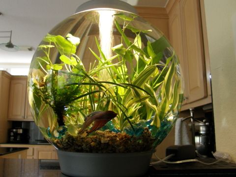 17 best images about fish tanks on pinterest cool fish for Fish and plant tank