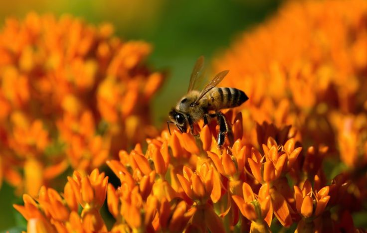 Even if you can't keep a hive of bees yourself, you can still plant your garden with them in mind.
