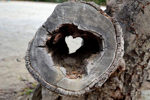 on the beach hollowed log wood heart