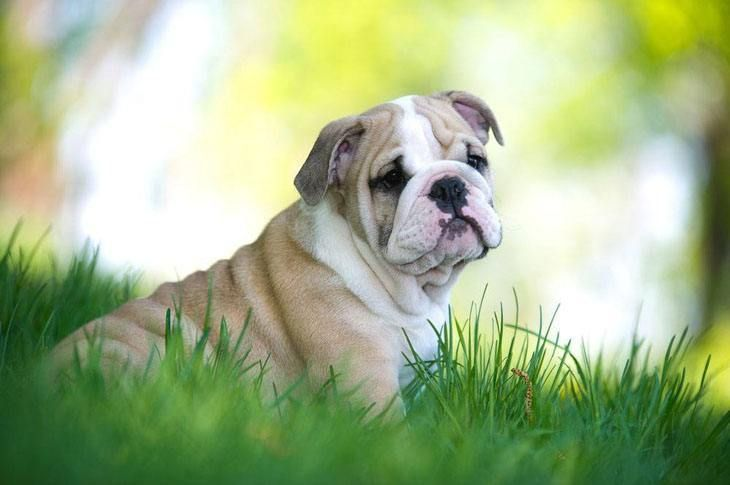 This Bully is hoping it's owner visits our Bulldog names page for naming ideas here>>> http://www.dog-names-and-more.com/Bulldog-Names.html