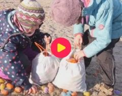Karrewiet: Aangespoelde Kinder Surprise-eitjes