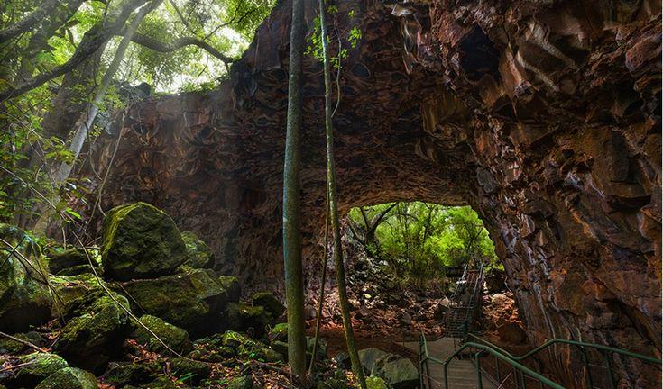 Undara lava tubes  - Australian Geographic  http://travelnq.com/undara-experience/