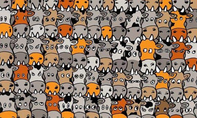 Onderwijs en zo voort ........: 3600. Dierenstarters : Zoek de hond