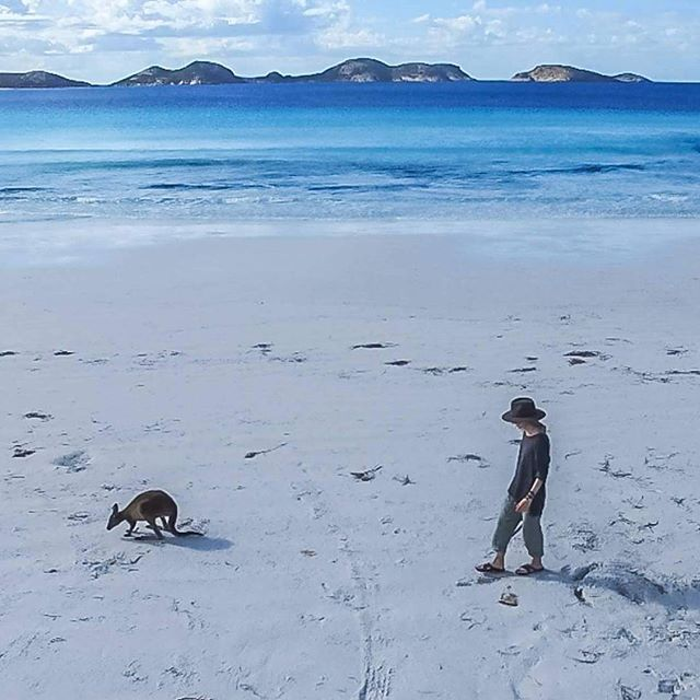 Morning walk with kangaroo and drone.  #australia #kangaroo #beach #luckybay #busemprzezswiat #roadtrip #travel #morning #adventure #joy #love #livethelittlethings #walk #peace #wild #wildandfree