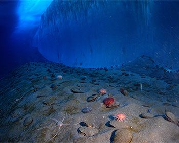 Estrellas de mar ayudan a comprender consecuencias de la acidificación oceánica | NUESTROMAR