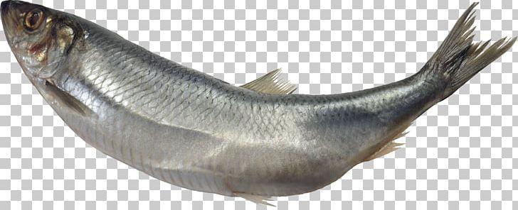 Fish Png Fish Fish Png Us Images