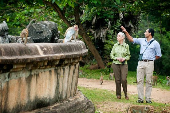 Jane Goodall on 'Monkey Kingdom,' Conservation and Climate Change