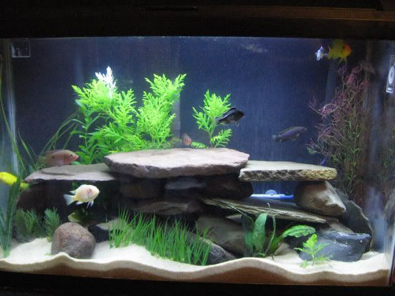 Idea By Christopher Luciano On Fish Tanks Fish Tank Themes 30 Gallon Fish Tank Fish Tank